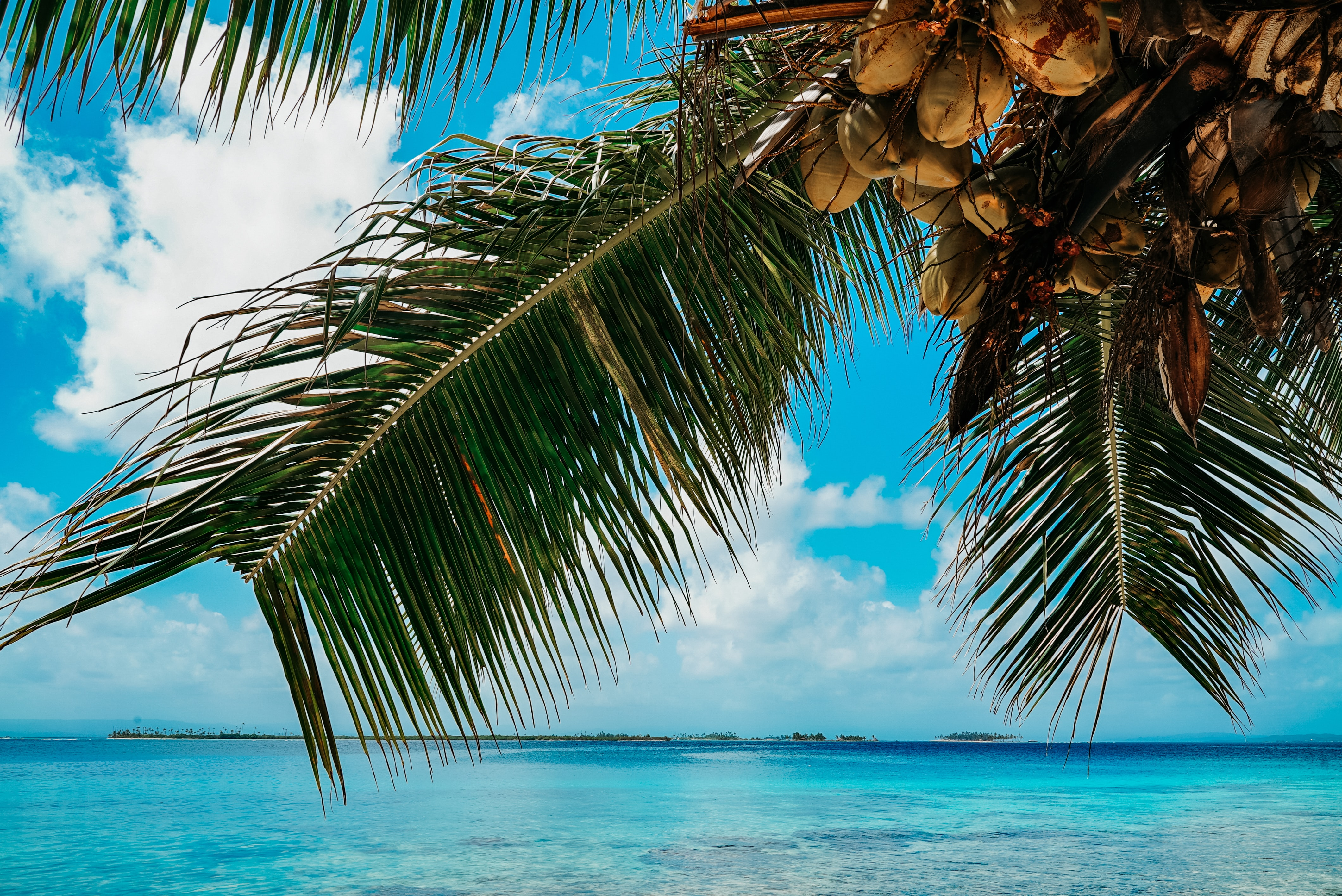 mladi kokos