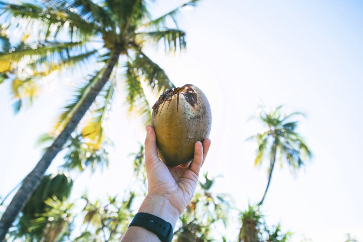 Zakaj kokosova voda?