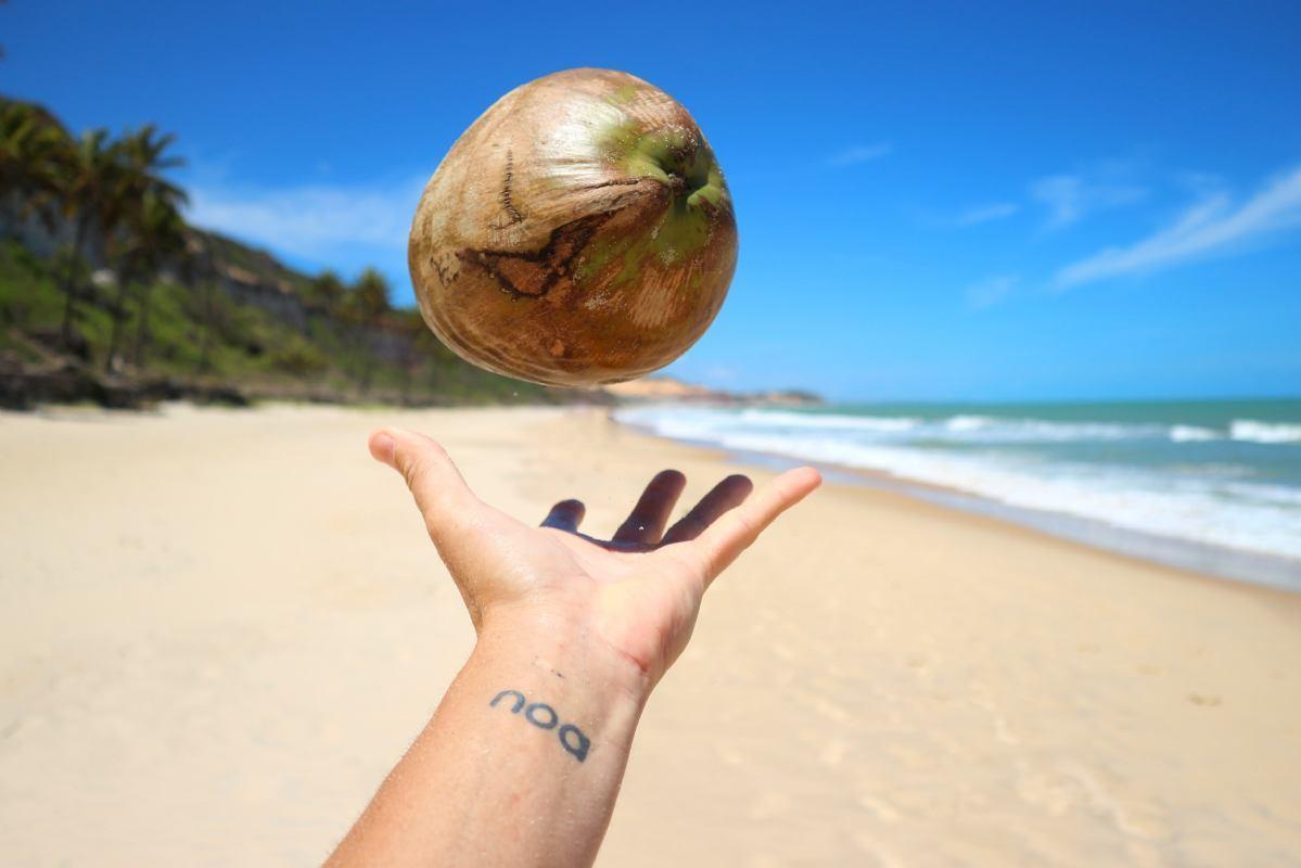 Postani i ti kokosov znalac!
