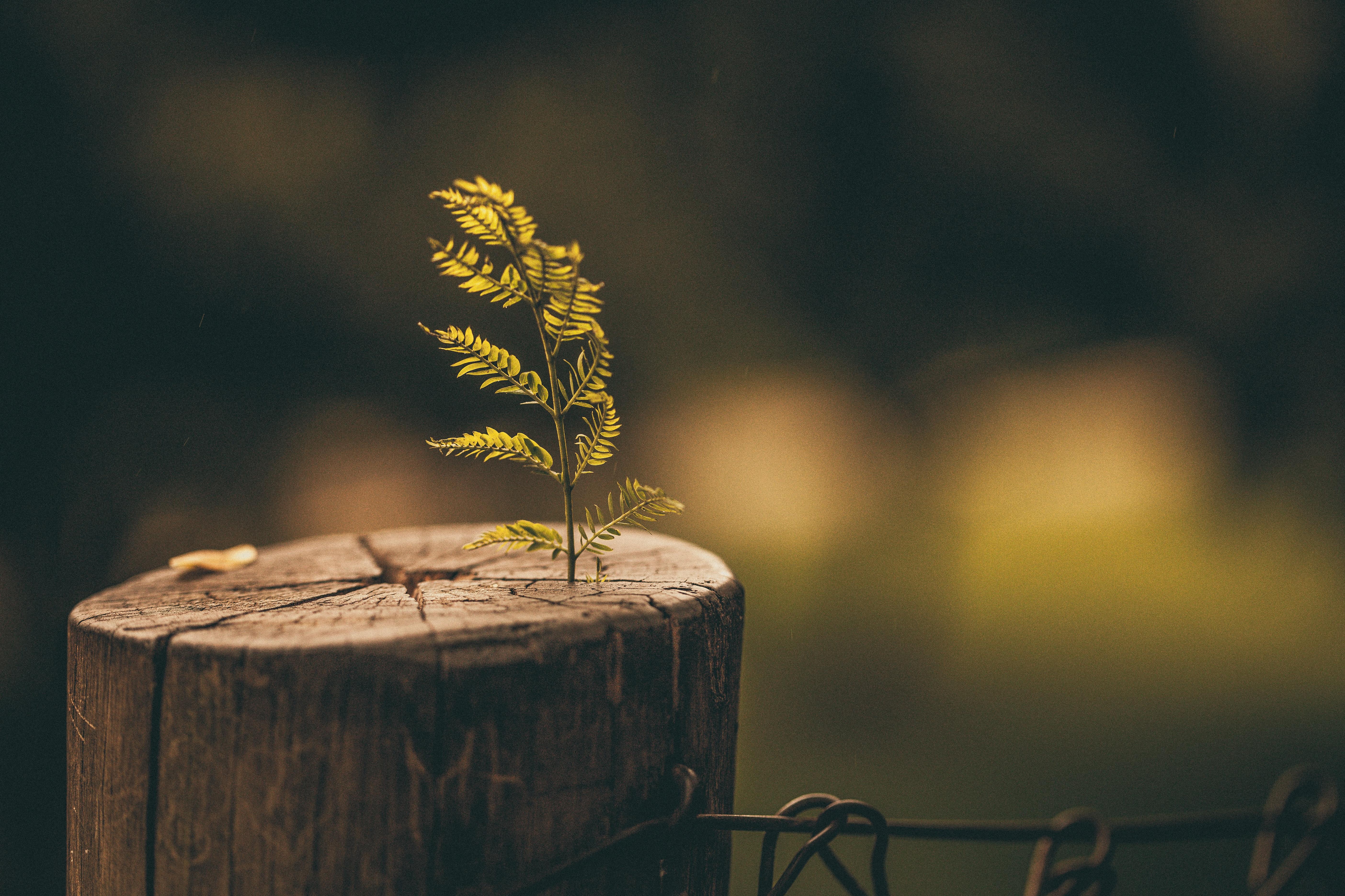 Drvo kao poklon